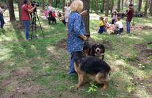 В Заволжском районе Ярославля обустроили еще одну площадку для выгула собак