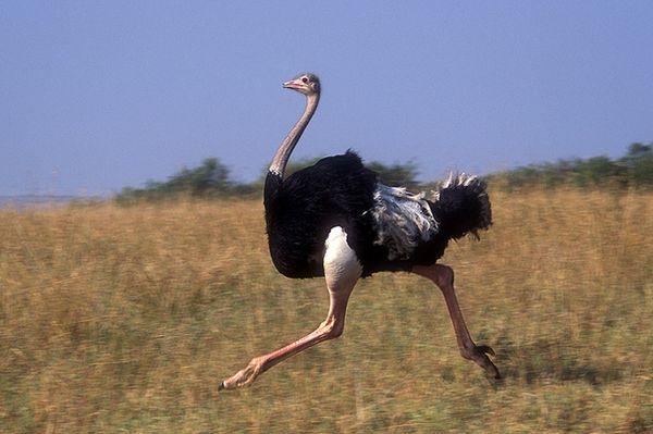 В казанском цирке страус набросился на зрителей