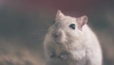 Мыши съели миллион в банкомате в Индии