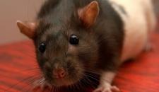 Мыши «распотрошили» банкомат, уничтожив больше миллиона