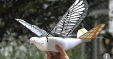 Китайские дроны-разведчики «маскируются» под птиц