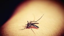 Билл Гейтс создаёт армию комаров-мутантов