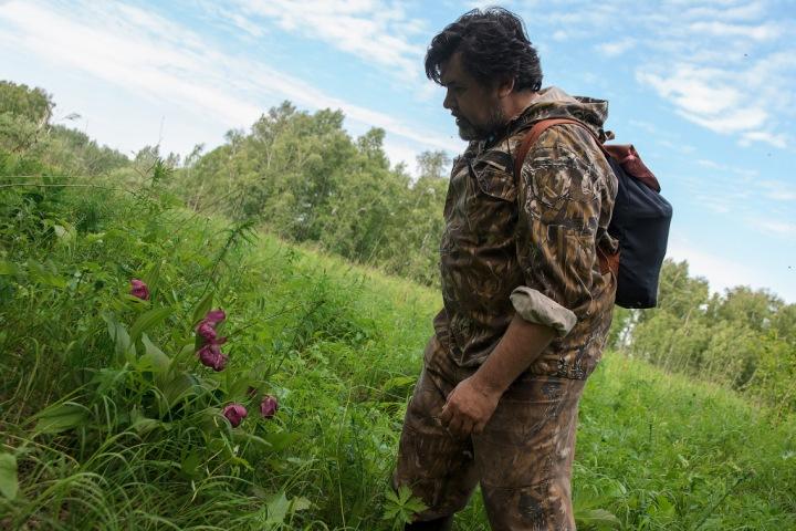 Соседство «любки» и «башмачка»: зачем охранять дикие орхидеи в Сибири