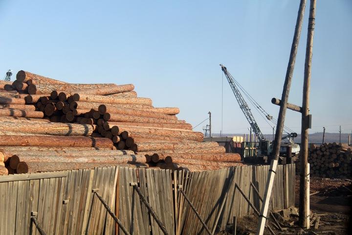 Китайцы пока не получили участки леса в 49-летнюю аренду в Бурятии