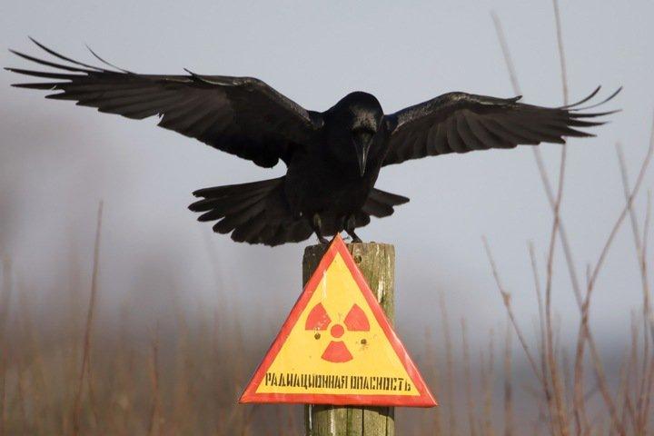 Экологи потребовали открыть информацию о радиоактивных отходах в Северске