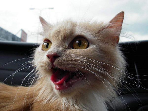 В Астраханской области спасли кота, неделю просидевшего в вентиляционной трубе