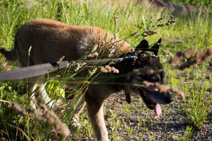 «Ту, что покусала, — в отлов»: куда пропадают бродячие собаки с улиц Новосибирска