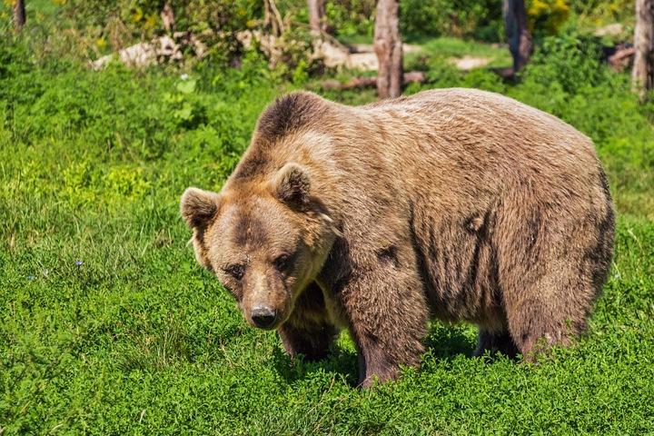 Красноярцы составили карту обитания медведей на территории заповедника «Столбы»
