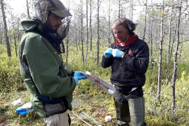 Британские ученые изучат влияние сибирских болот на климат