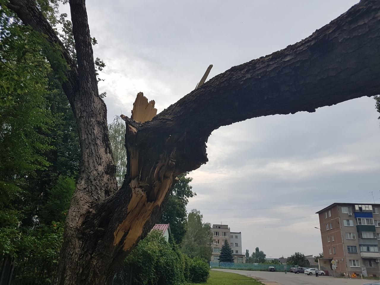 Дерево рухнуло на проезжую часть в Липецке