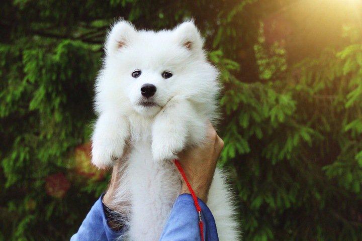 Житель новосибирского Академгородка избил больного щенка и убежал в лес
