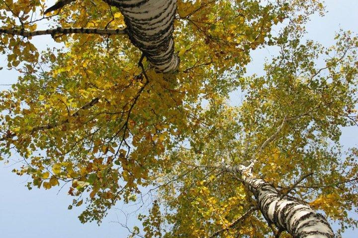 Власти отмечают устойчивый спрос на новосибирский лес у китайцев