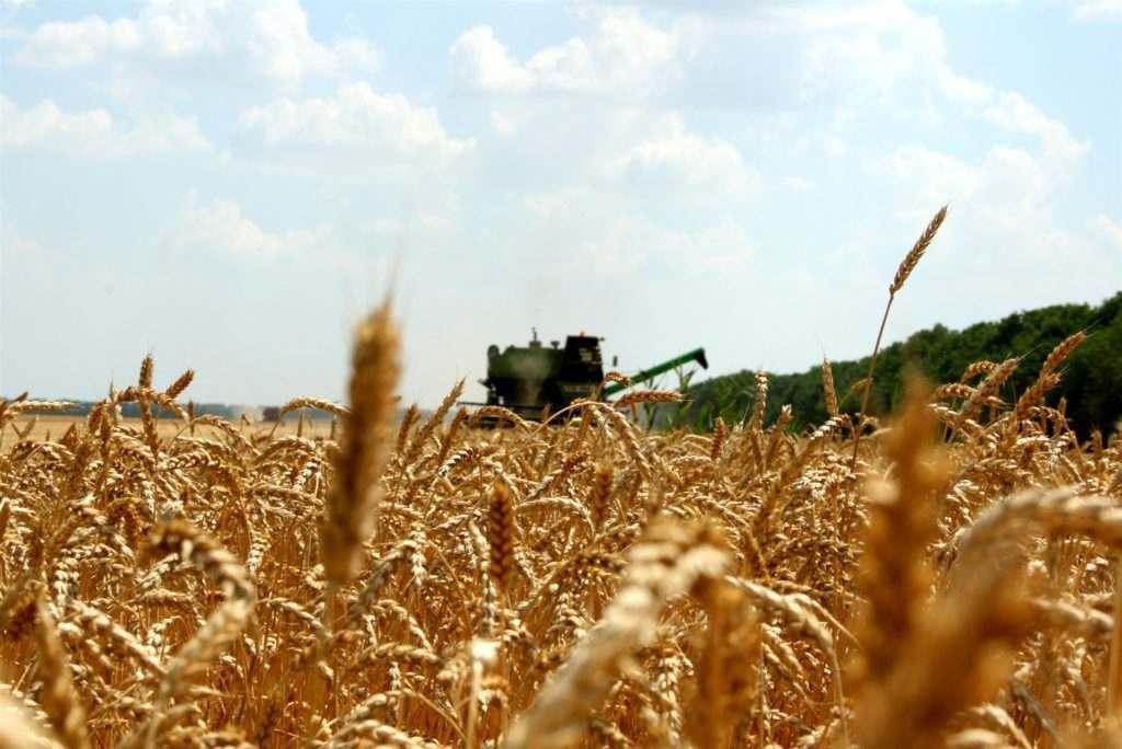 Современное оборудование для послеуборочной обработки зерна
