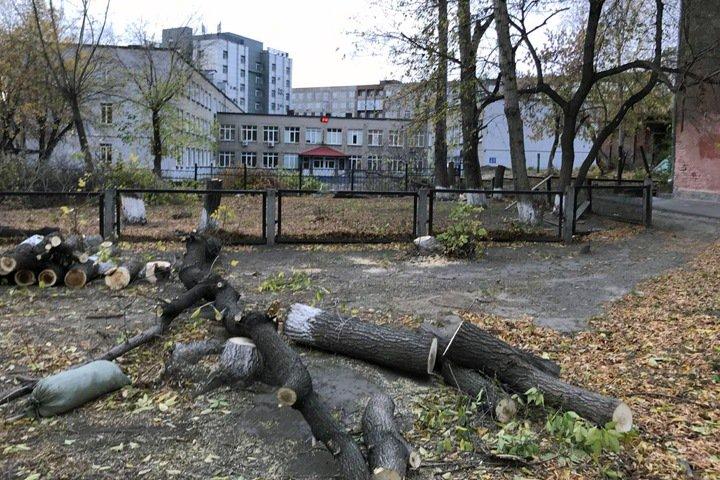Деревья под строительство 10-этажки начали вырубать около новосибирской школы