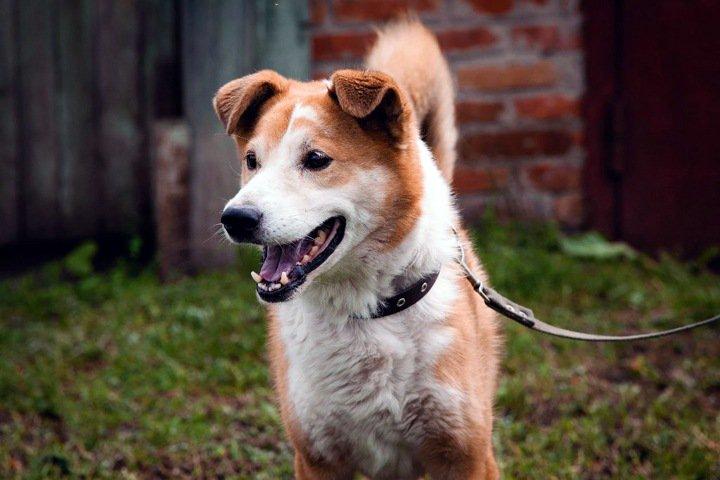 Сибирские ученые сделали уникальный протез для собаки