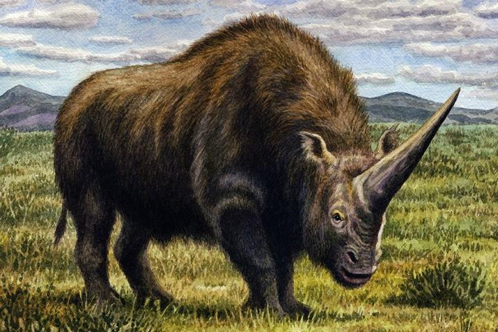 «Сибирский единорог» оказался современником людей. Узнать это ученым помогли пещерные гиены