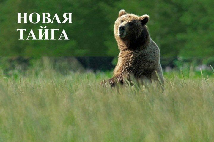 Тайга.инфо увеличила в 2,5 раза отрыв от новосибирских СМИ в рейтинге цитируемости