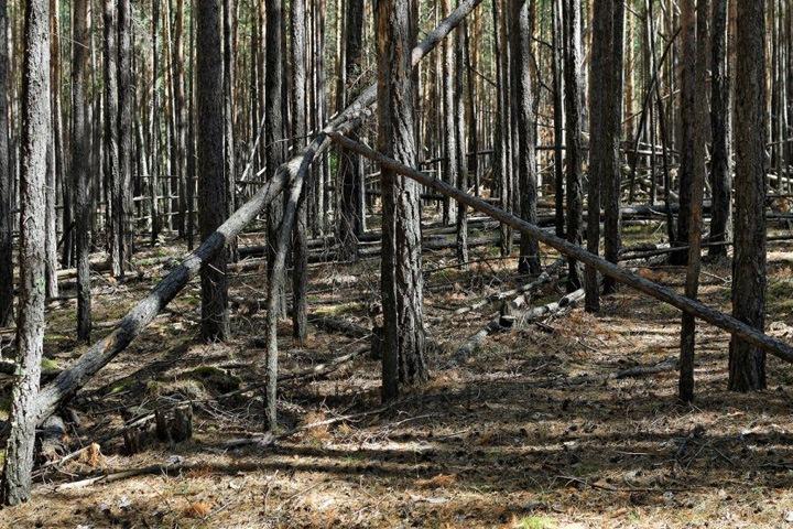 Жители алтайской деревни перепутали валежник с сухостоем и получили штраф за незаконную рубку леса
