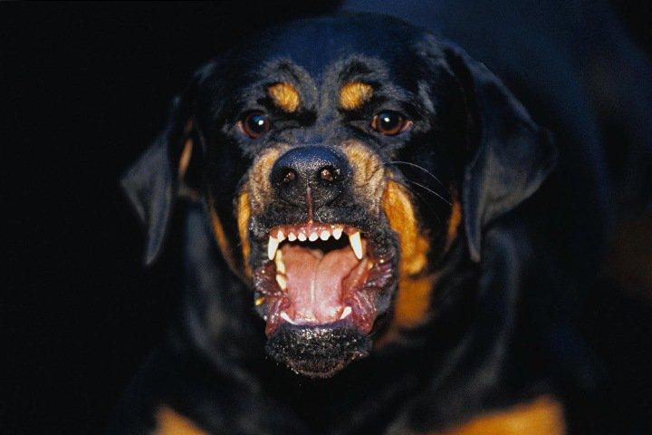 Домашние собаки загрызли новорожденную в Томске