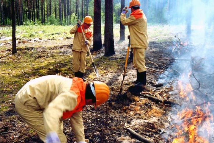 Площадь природных пожаров в Сибири превысила 5 тыс. га
