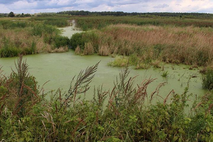 Спикер омского заксобрания предложил развивать «болотный туризм» в регионе