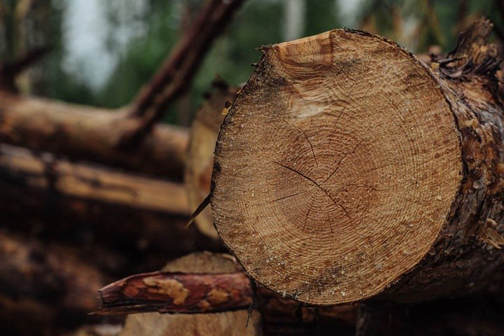 The New York Times: Китай сохраняет свои леса, вырубая Сибирь