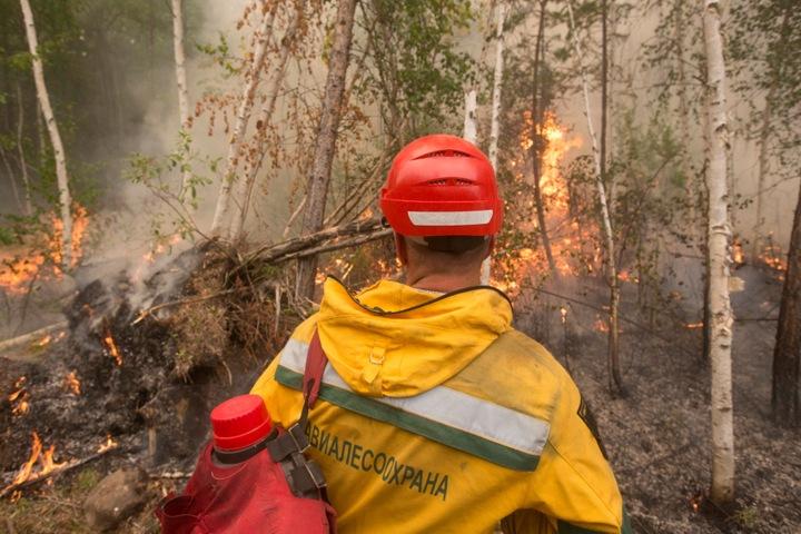 Пожароопасный сезон установили в Новосибирской области