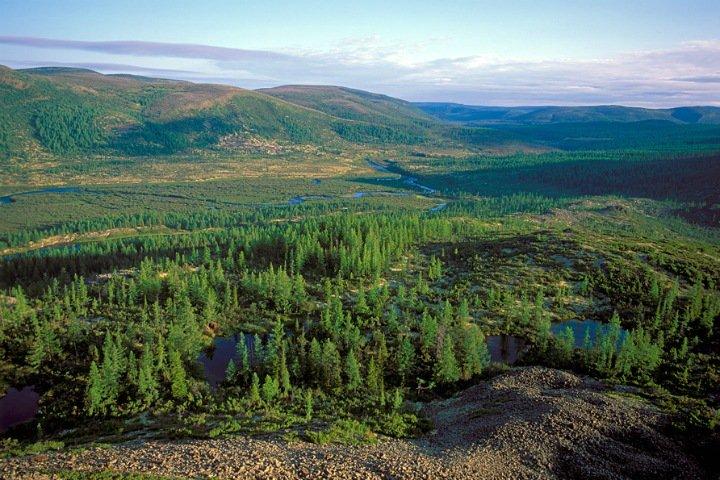 Сибирскую тайгу спасут композиты из сахарного тростника. Их изучают в Томске