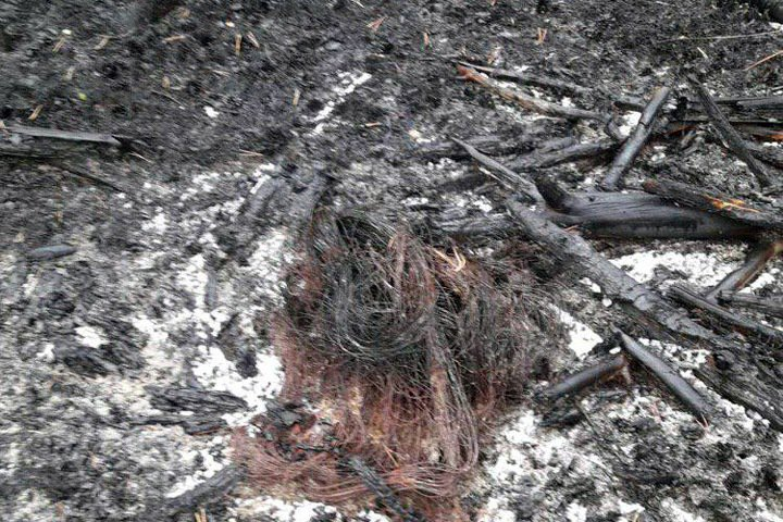 Иркутское правительство обратится в полицию из-за поджогов леса