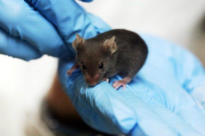 Экологически чистые наночастицы графена можно использовать в медицине. Это доказали на мышах