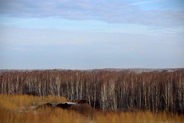 Власти Алтая не согласились с проверкой Рослесхоза по вырубкам