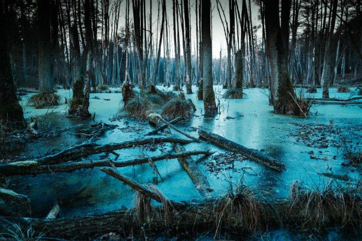 Озера в Арктике быстро превращаются в болота. Виновато глобальное потепление