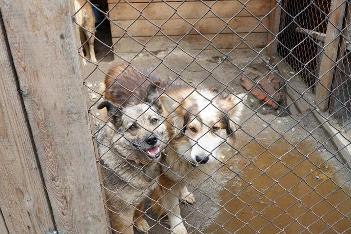 «Собеседование очень жесткое»: как взять собаку или кошку из новосибирских приютов