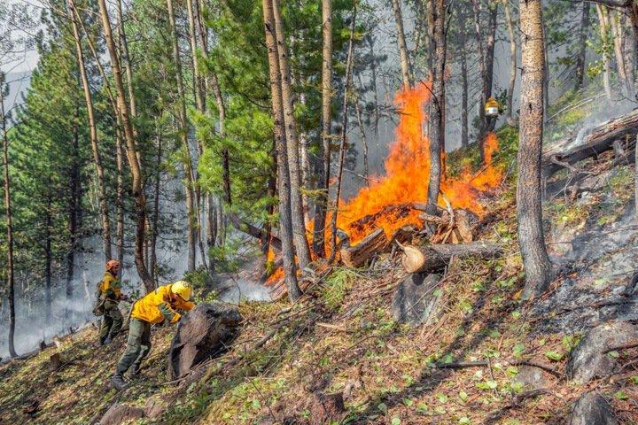СПЧ рассказал об иркутских лесах: горящая пять лет свалка, коммерческие вырубки под видом санитарных и недофинансирование