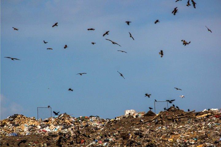 Завысили стоимость на десятки миллионов: ФАС нашла нарушения у «Экологии-Новосибирск»