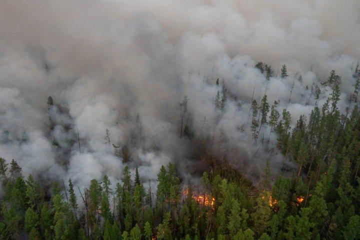 Площадь природных пожаров выросла в Сибири