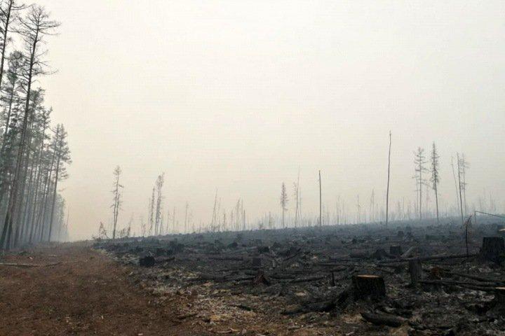 Замглавы красноярской полиции ловит в тайге поджигателей леса