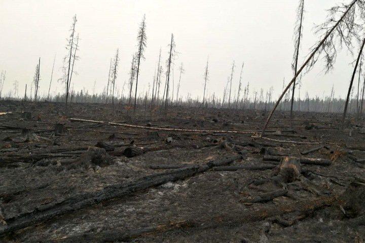 Незаконные вырубки в Красноярском крае. Возбуждено 15 уголовных дел