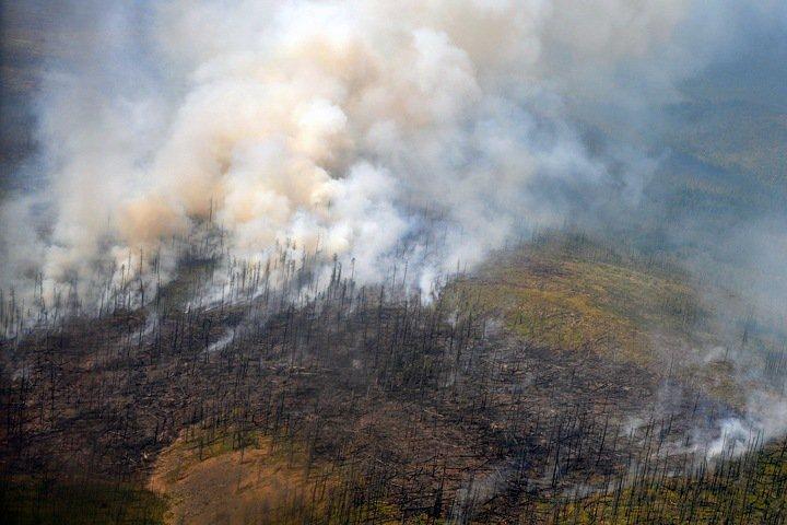 Площадь лесных пожаров начала резко расти в Сибири