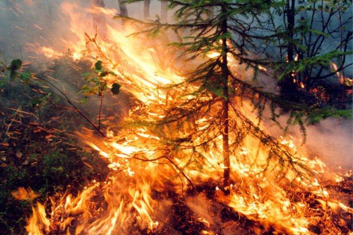 СК завел дело о лесных пожарах в Сибири