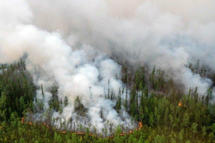 Числа недели: миллионы на восстановление Сибири, солнечная экономия и парашютисты против пожаров