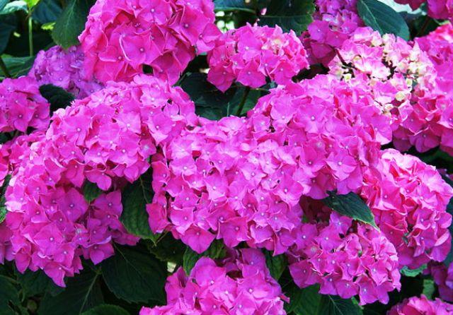 Ядовитые комнатные растения – цветы, которые могут навредить здоровью