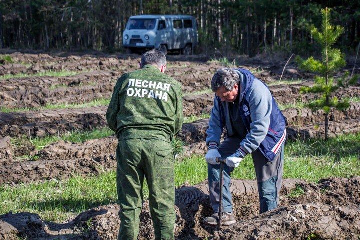 Новосибирские власти предложили штрафовать склады древесины