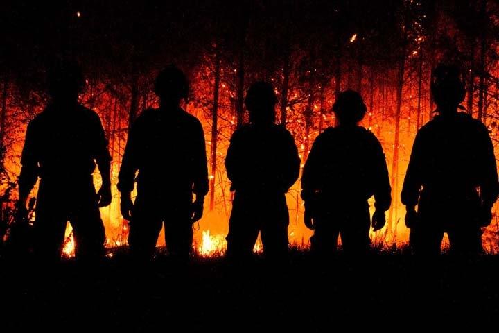 Власти отчитались о тушении всех лесных пожаров в России