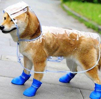 Нужна ли одежда для собак?