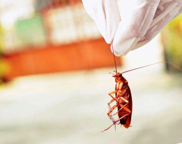 Почему тараканы опять стали появляться в квартирах?