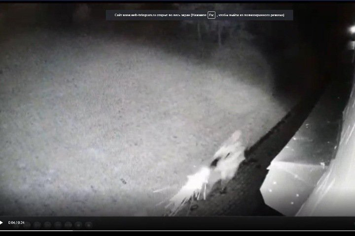 Опубликовано видео убийства экс-мэра Киселёвска