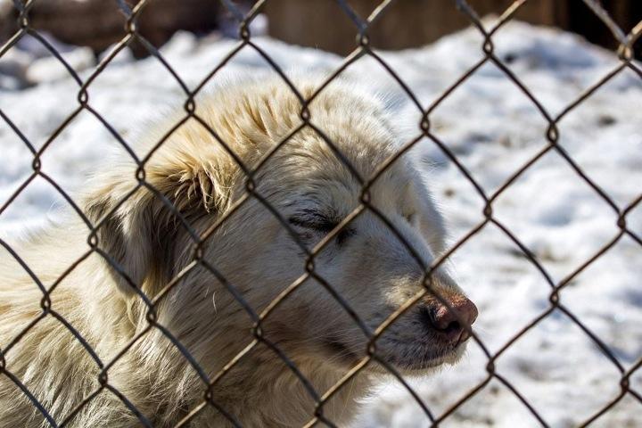 Новосибирские активисты пожаловались на чипирование собак без наркоза в центре по проблемам домашних животных