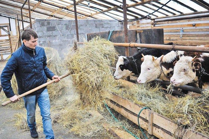 Спикер новосибирского парламента пообещал господдержку малым фермерским хозяйствам