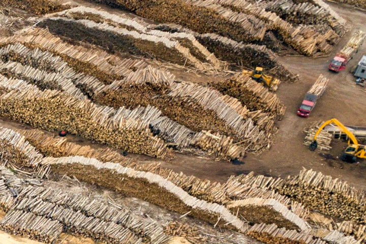 Силовики делят кофейни, китайцы рубят лес, Алтай пытается всех накормить. Сибирь за неделю